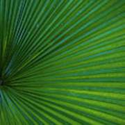 Tropical Leaf Poster