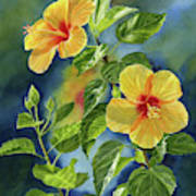 Tropical Yellow Orange Hibiscus With Background Poster
