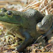 True Frog Poster