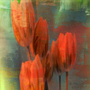 Tulips With Green Background Poster