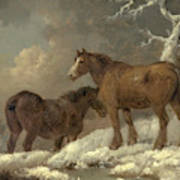 Two Horses In The Snow Poster