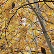 Two Owls In Autumn Tree Poster