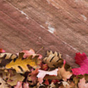 Utah, Autumn Leaves Piled Poster