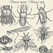 Vector Set Insects In Vintage Style Poster
