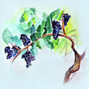 Vine And Branch Poster