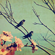 Vintage Spring Image With Swallows And Poster