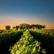 Vouvray Vineyard Poster