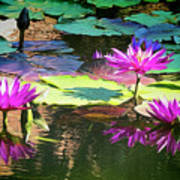 Water Lily 6 Poster