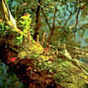 Water Log Poster