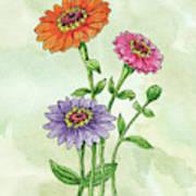 Watercolor Orange Pink Purple Zinnia Flowers Poster