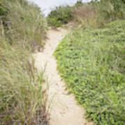 Wellfleet Sand Dunes Poster