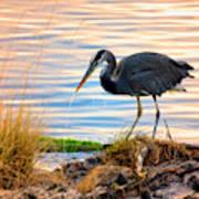 Wheeler Oregon - Great Blue Heron Poster