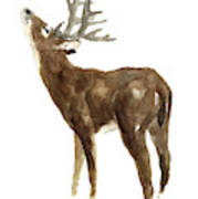 White Tailed Deer Stag With Head Tilted Upwards Poster