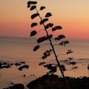 Wild Sunset  Poster