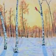 Winter Birches-cardinal Right Poster