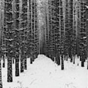 Winter Forest In Black And White Poster