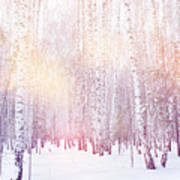 Winter Magic Birch Grove Poster