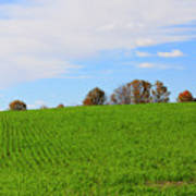 Winter Wheat In October In Southern Ontario Poster