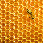 Working Bee On Honeycells Poster