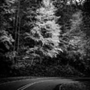 Yellow Tree In The Curve In Black And White Poster
