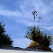 Yucca Plant In Rippled Sand Dunes In White Sands National Monument - Newm500 00107 Poster