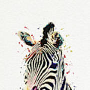 Zebra Watercolor Painting Poster