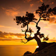 Zen Is A Tree On The Cliff Rocks And Poster