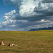 Kangaroos and approaching storm Poster