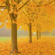 Misty Sycamore Tree Avenue In Autumn Poster