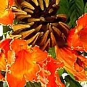 African Tulip Tree Poster