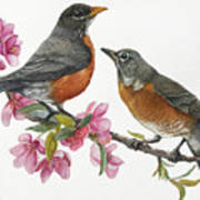American Robins State Bird Original Wildlife Watercolor Poster