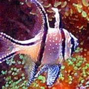Banggai Cardinalfish Poster