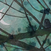 Barred Owl Moon Poster
