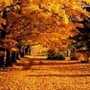 Blazing Autumn Oaks Poster