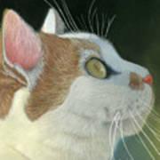Cat Portrait Pastel Painting Poster