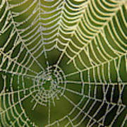 Droplets Of Dew On A Spiders Web Poster
