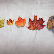 Five Autumn Leaves Poster