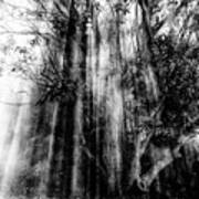 Light beams through tree in monochrome Poster