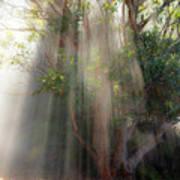 Lightbeams through tree Poster