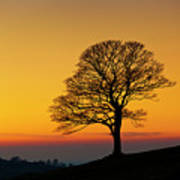 Lone Winter Tree At Sunset Poster