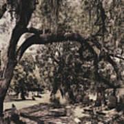 Magnolia Cemetery Poster