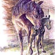 Maternal Bond Five Hours Old Arabian Mare With Newborn Foal Poster