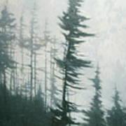 Pine Portrait Poster