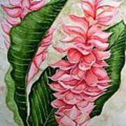Pink Ginger Lilies Poster