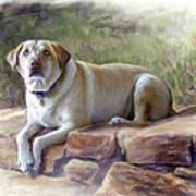 Restrained Energy- Yellow Labrador Retriever Portrait Poster