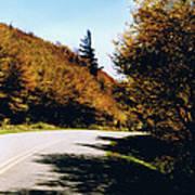 Single Spruce Poster