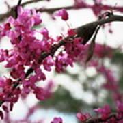 Spring Bloom  8 Poster