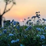 Sunset Behind Flowers Poster