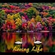 Swans Loving Life Poster