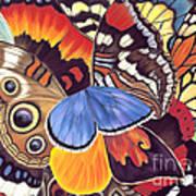 Wings Of California Poster
